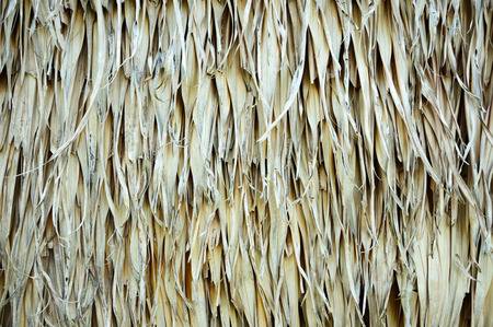 thatch: thatch roof texture for background