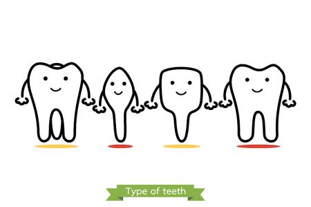 premolar: tooth type - incisor, canine, premolar, molar - dental cartoon vector outline style, cute character for design