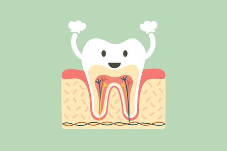 A dental cartoon flat vector, healthy tooth anatomy is fun illustration.