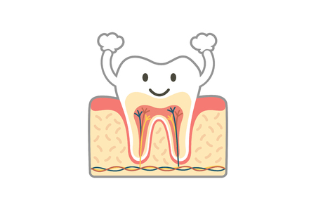 dental cartoon flat vector, healthy tooth anatomy is fun isolated on white background