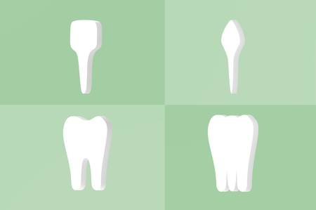 tooth type - incisor, canine, premolar and molar - dental cartoon 3d render flat style cute character for design