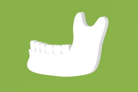 lower human jaw , tooth on mandible - dental cartoon 3d render flat style cute character for design