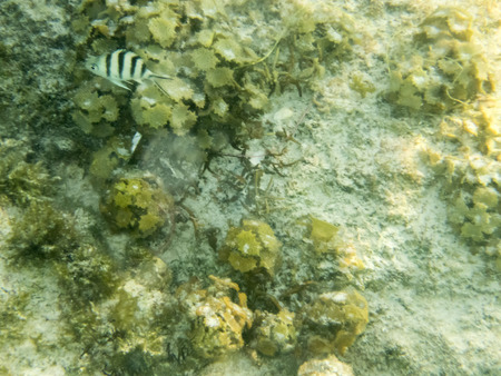 reef fish: fish on coral reef