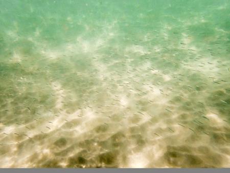 fondali marini: pesci del bambino sul fondale sabbioso Archivio Fotografico