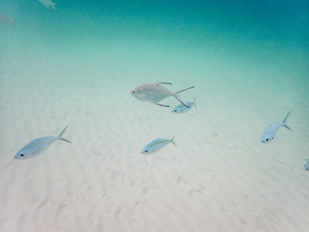 varieties of fishes on sandy seabed 版權商用圖片
