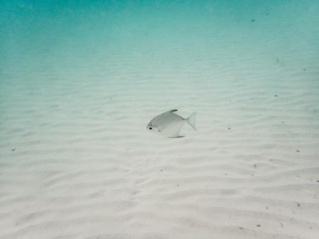 fondali marini: pesce sul fondale sabbioso Archivio Fotografico