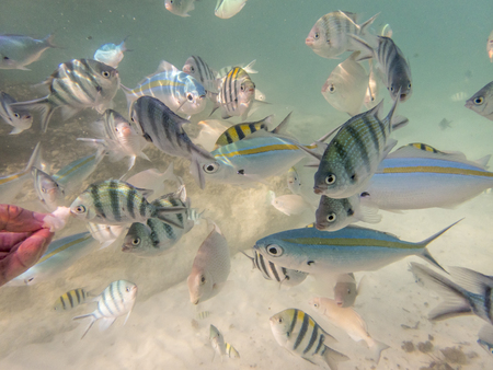 feeding varieties of fishes on sandy seabed