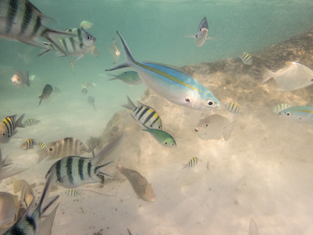 wrasse: varieties of fishes on sandy seabed Stock Photo