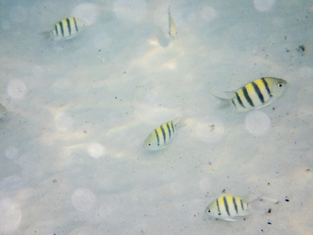 sandy: fishes on sandy seabed