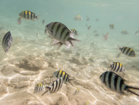 redang: fishes on sandy seabed