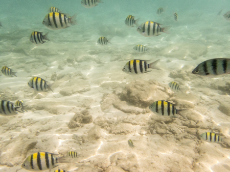 fishes on sandy seabed