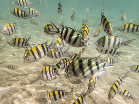 fond marin: poissons sur fond de sable Banque d'images