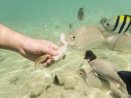 fond marin: alimentation vari�t�s de poissons sur fond de sable Banque d'images