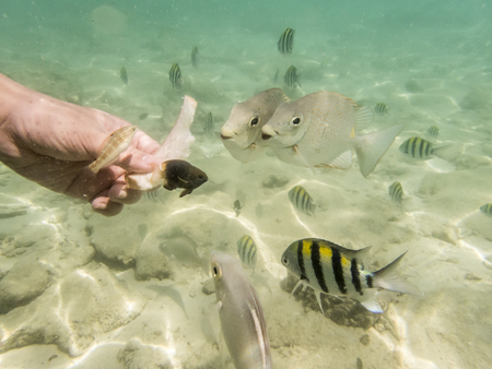 rabbitfish: feeding varieties of fishes on sandy seabed
