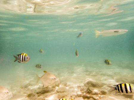 fond marin: vari�t�s de poissons sur fond de sable