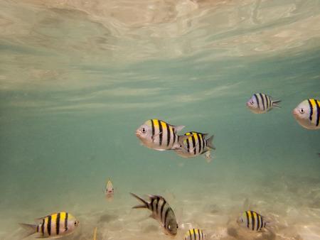 seabed: pesci sul fondale sabbioso