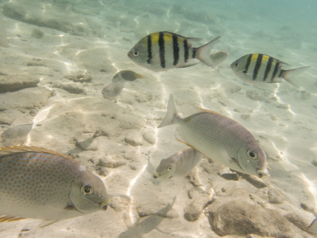 parrotfish: varieties of fishes on sandy seabed Stock Photo
