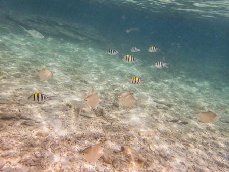 fond marin: variétés de poissons sur fond de sable