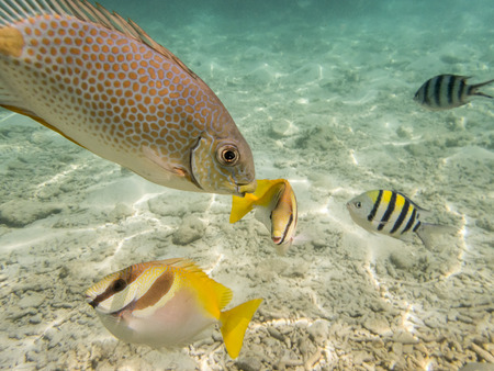 varieties of fishes on sandy seabed Stock Photo