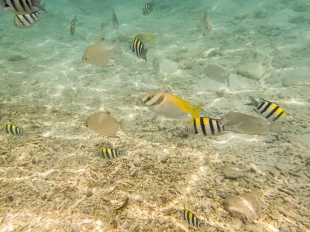 seabed: varietà di pesci sul fondale sabbioso