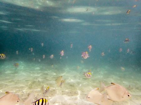 varieties: varieties of fishes on sandy seabed Stock Photo