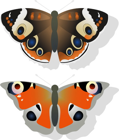 Two butterflies Vector