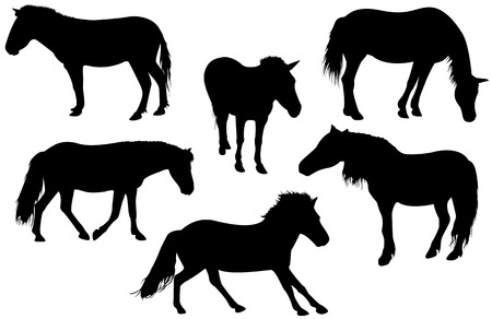 Set of detailed horses Vector