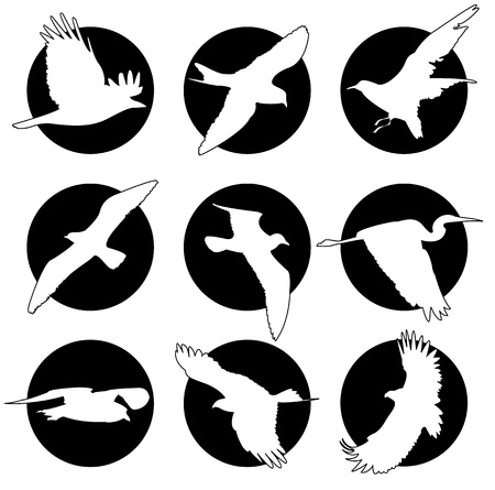 Set of brand collection of logos with birds Vector