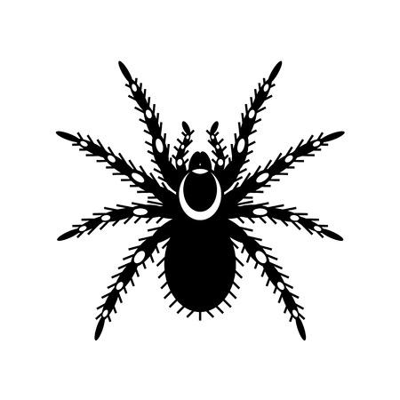 Black & white vector of tarantula