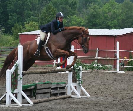 Horse show hunter division Standard-Bild