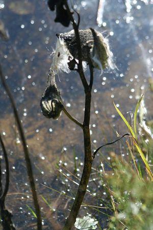 ハミングの鳥の巣