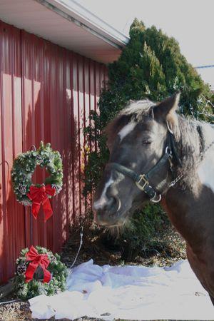Christmas horse portrait Standard-Bild