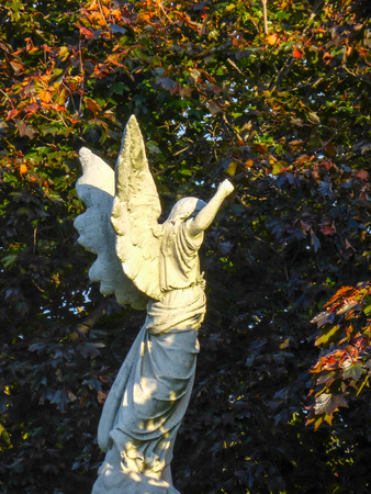 pensiveness: White angel against dark trees Stock Photo