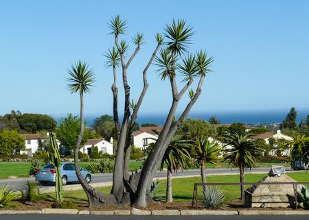 bole: Palm tree at the Pacific seashore Stock Photo