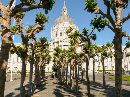 traditon: San Francisco City Hall Civic Center, in front rows of the trees. Editorial