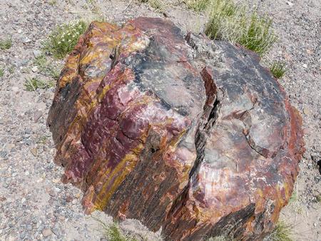 petrified: Closeup view of petrified wood in Petrified Forest National Park
