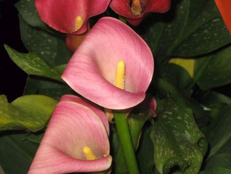 screensavers: Flowers Stock Photo