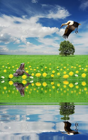 hunting on frog over  water stork Stock Photo - 4403339