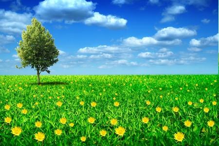 the lonely tree on green flowery meadow on background of sky Reklamní fotografie