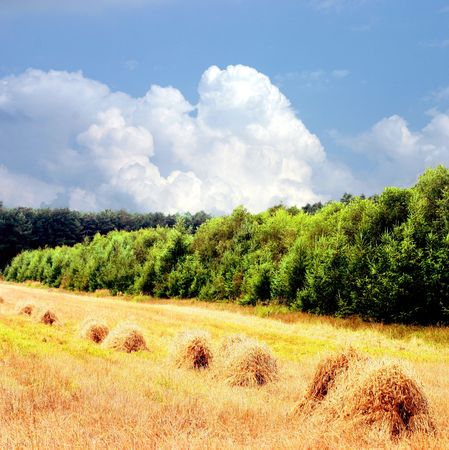 harvests: field after harvests from sheaves Stock Photo