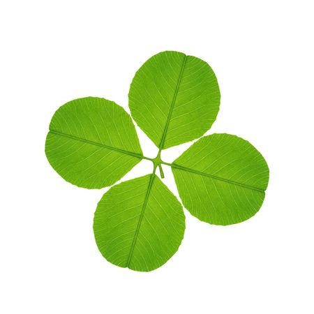 four  leaf clover on white background Stock Photo - 5017246