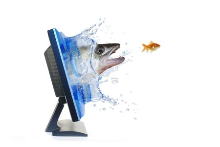 in chase for gold fish photo