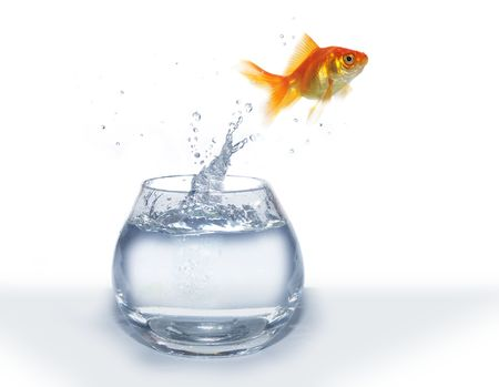 gold  jumping out from round glass aquarium fish