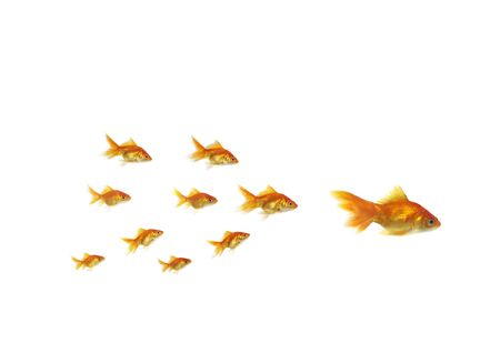 following shoal small gold fish for large on white background Stock Photo - 5483647