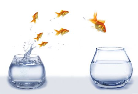 chasing tail: jump gold fish from aquarium to aquarium on white background
