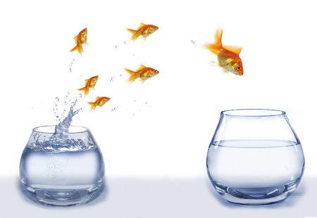 leader concept: jump gold fish from aquarium to aquarium on white background