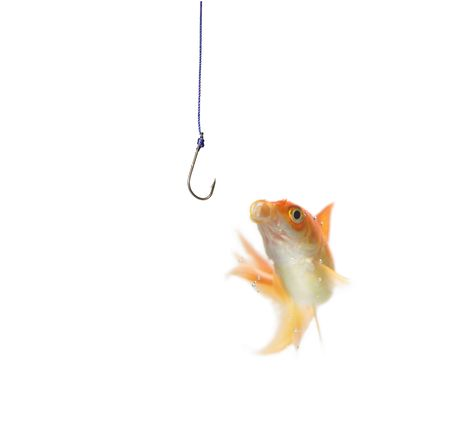 gold fish and empty hook on white background photo