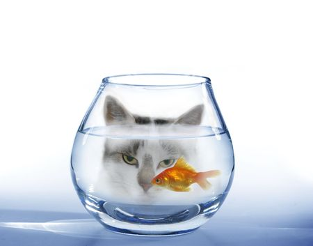 look at on swimming in aquarium fish cat