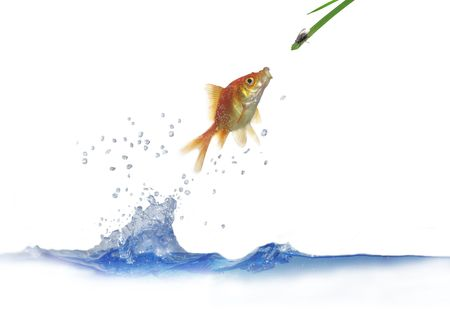 jumping out from water fish and hunting on fly Stock Photo - 5483655