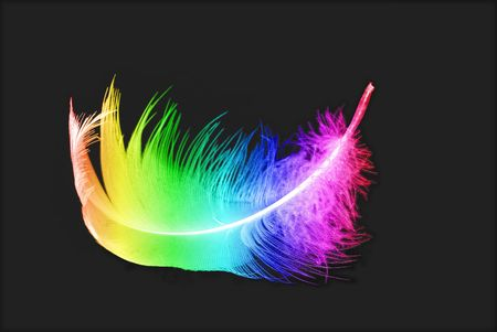 bird's colorful feather on black background
